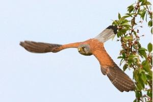 Фото птицы беларуси 8