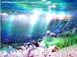 Подводный мир морские звезды фото 7