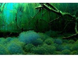 Игра подводный мир кладбище