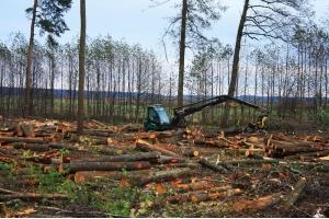Фото вырубка лесов 1
