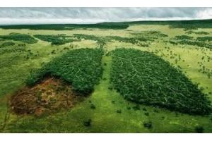 Фото вырубка лесов 3