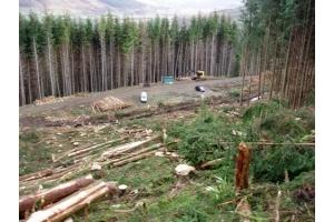 Фото вырубка лесов 4