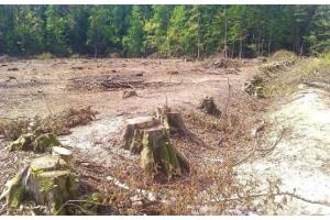 Фото вырубка лесов 5