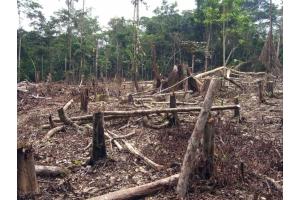 Фото вырубка лесов 7