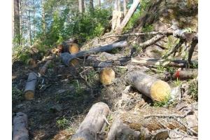 Фото вырубка лесов 8