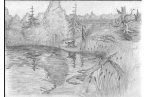 Природа рисунки 3