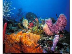 Подводный мир фото на рабочий стол 7