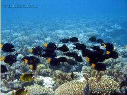 Подводный мир красного моря фото 7