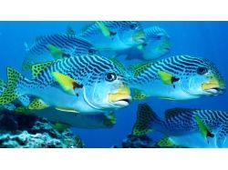 Подводный мир рыбы фото