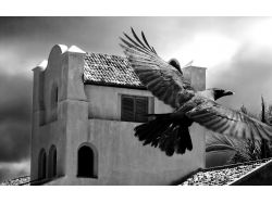 Черно-белые широкоформатные фото 7