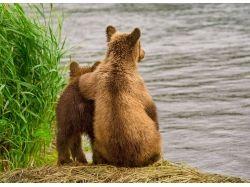 Дидактические картинки животные россии