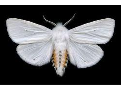 Ночные бабочки насекомые фото