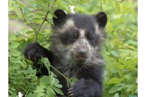 Медвежонок картинки 2