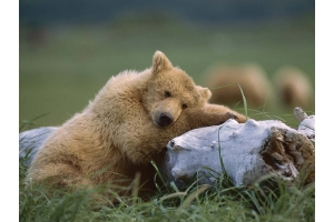 Медвежонок картинки 3