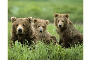 Медвежонок картинки 6