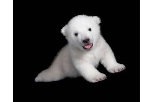 Медвежонок картинки 7
