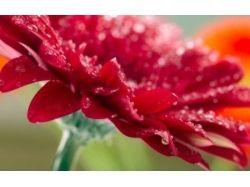 Цветочные насекомые фото 7