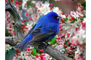 Птицы весной картинки