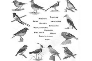 Птицы весной картинки 3