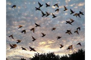 Птицы весной картинки 7