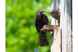 Птицы весной картинки 8
