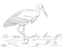 Вымпеловая райская птица - раскраски для детей