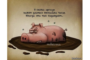 Свинья картинки 2