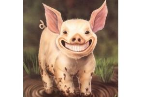 Свинья картинки 6