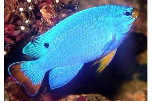 Картинки рыб 1