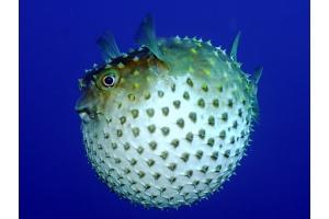 Картинки рыб 2