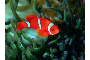 Картинки рыб 3