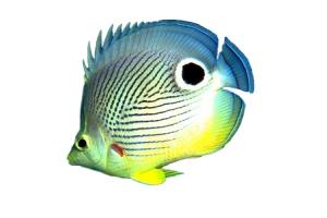Картинки рыб 4