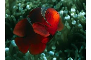 Картинки рыб 5