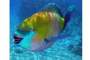 Картинки рыб 7