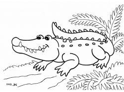 Крокодил гавиал - раскраски для детей 7