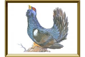 Птица глухарь фото 4