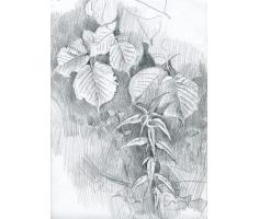 Березовый лист рисунок 2