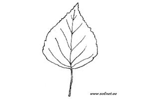 Березовый лист рисунок 3
