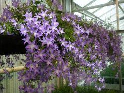 Фото цветы для балкона 7