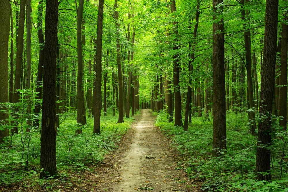 картинки лес картинки лес без клавиатуры