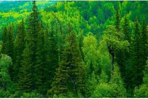 Лес картинка