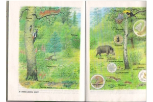 Лес картинка 2