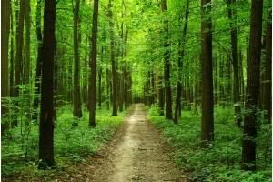 Лес картинка 3