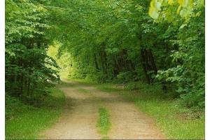 Лес картинка 5