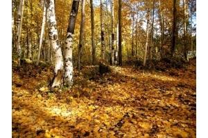 Лес картинка 7