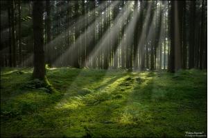 Лес картинка 8