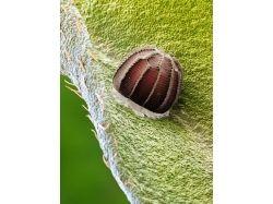 Фотографии насекомых под микроскопом