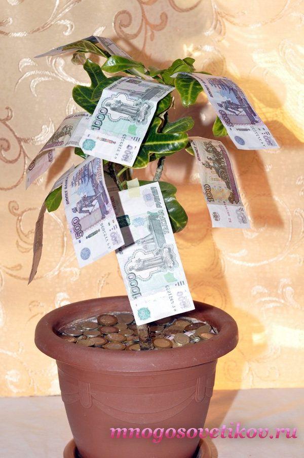 поздравления с днем рождения мужчине денежное дерево можете