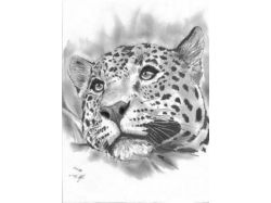 Барсы, волки, львы, тигры картинки