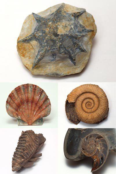 недавно фото названия окаменелости моллюсков машин сайте бесплатных